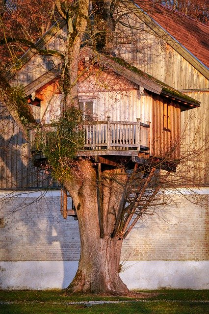 treehouse in a large tree